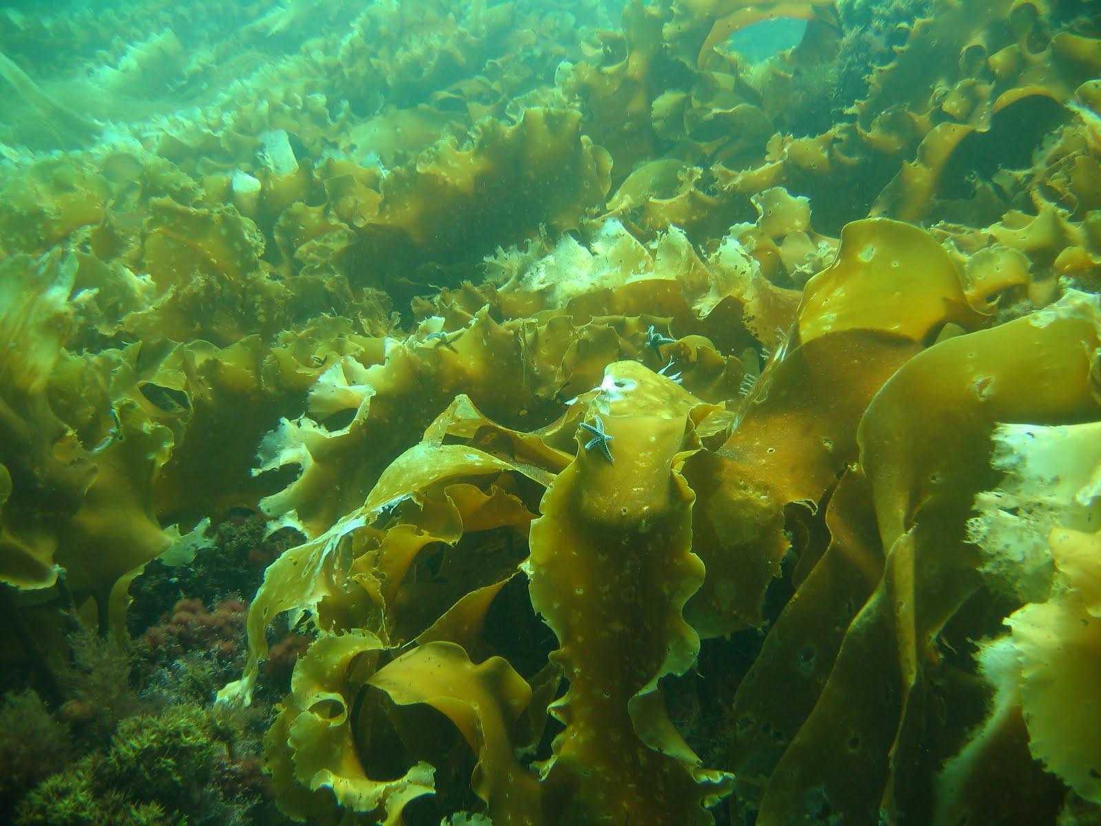 корал 2000 инструкция по применению