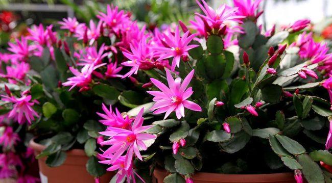 Когда можно в июле пересаживать комнатные цветы