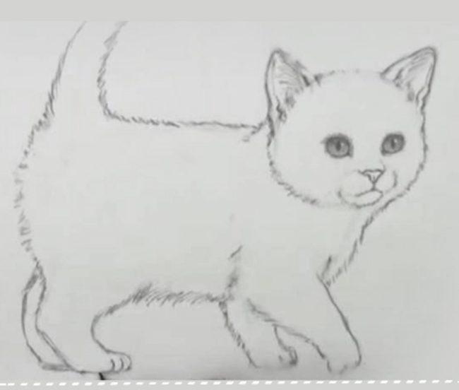 котята рисунки картинки
