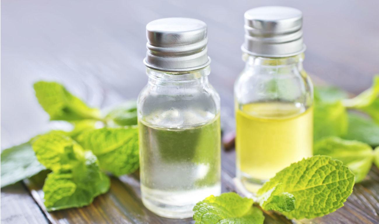 Как получить масло из мяты в домашних условиях