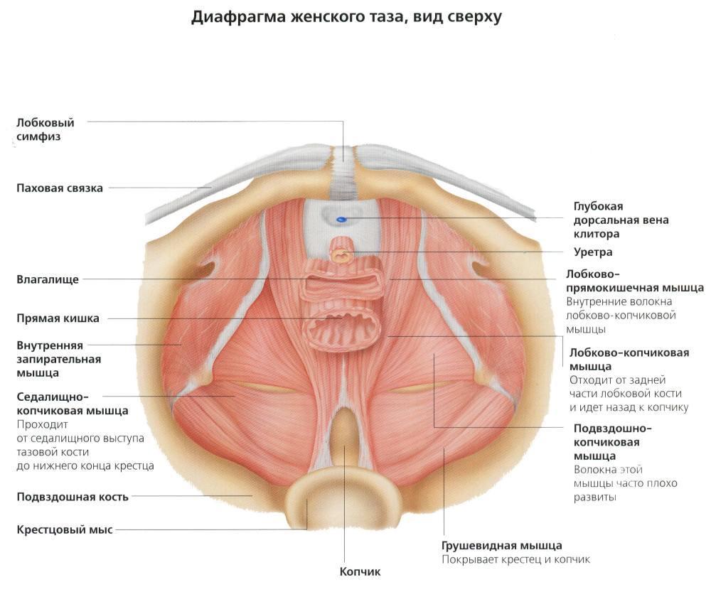 Кск сжать мышцы во время секса