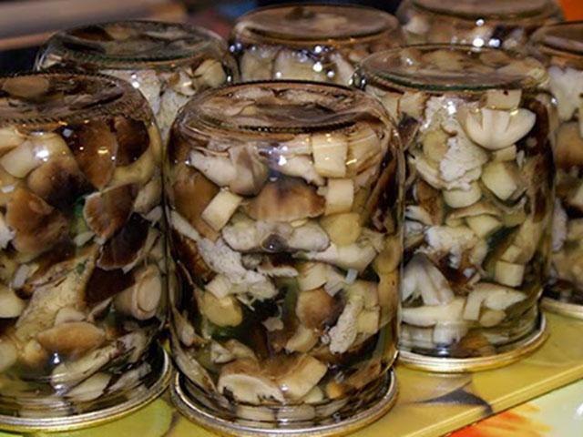 доход хозяйству рецеп на зиму грибов подсосновиков вашему вниманию стенд