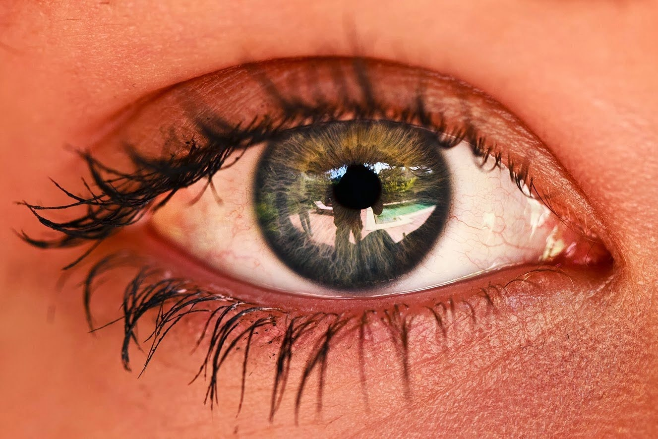 human vision and the eye essay