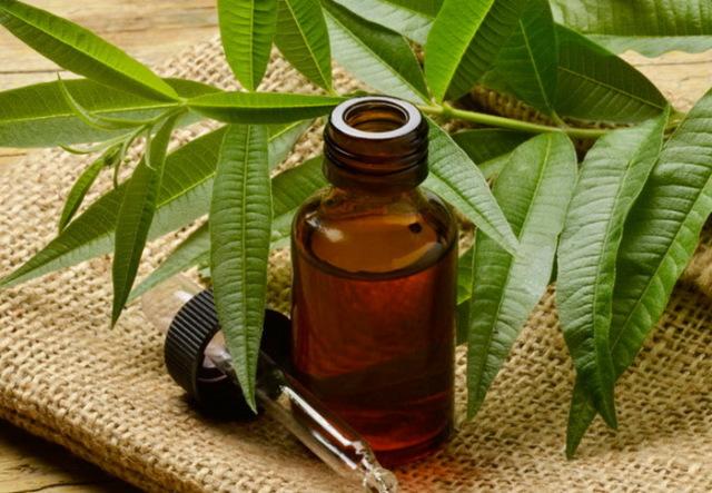 Картинки по запросу эфирное масло чайного дерева