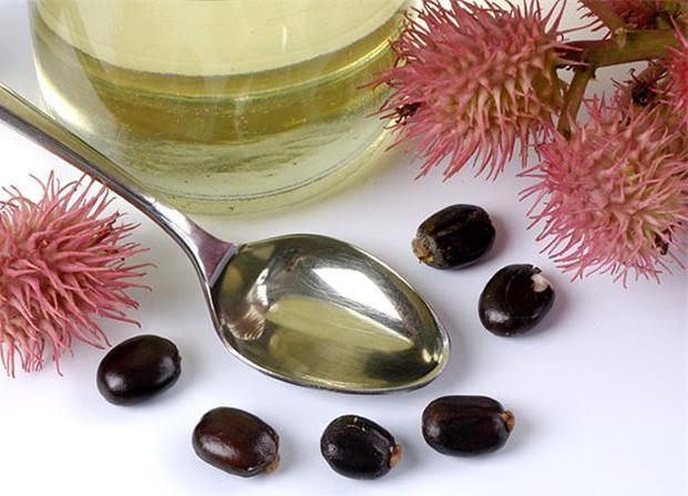 Ricinus fruits, seeds and oil (Castor oil)