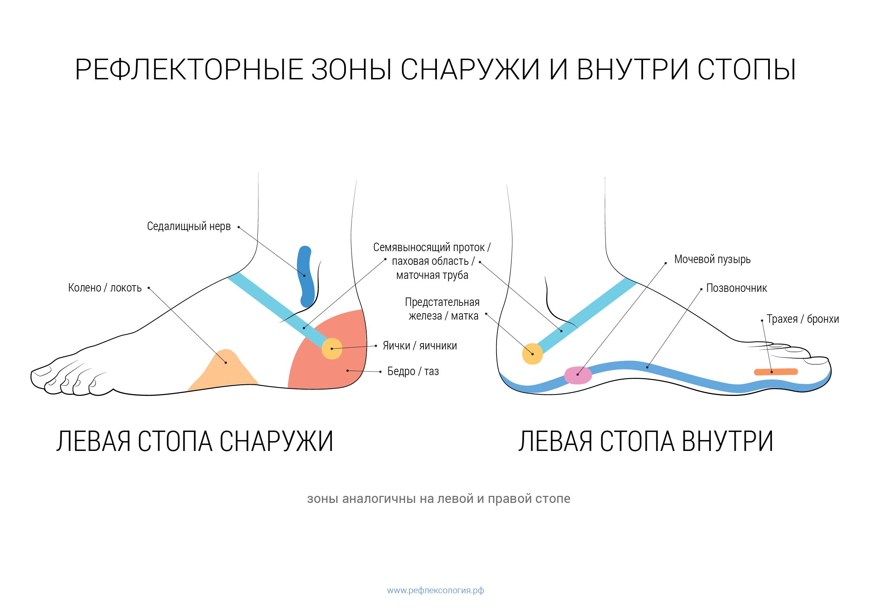 Схема массажа стоп ног фото 320