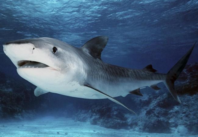 Применение акульего жира для лечения суставов
