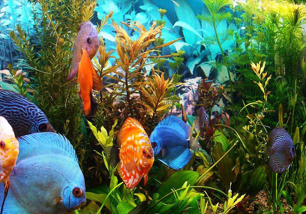 картинки всех рыбок в аквариуме изобретательного врача