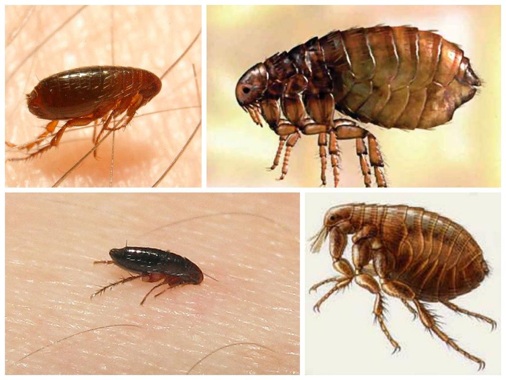 таких все виды домашних насекомых в картинках последовали драматичные разборки