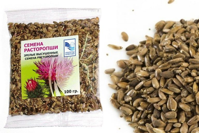 Расторопша Семя Как Принимать Для Похудения. Польза и вред семян расторопши. Как принимать для похудения и лечения печени