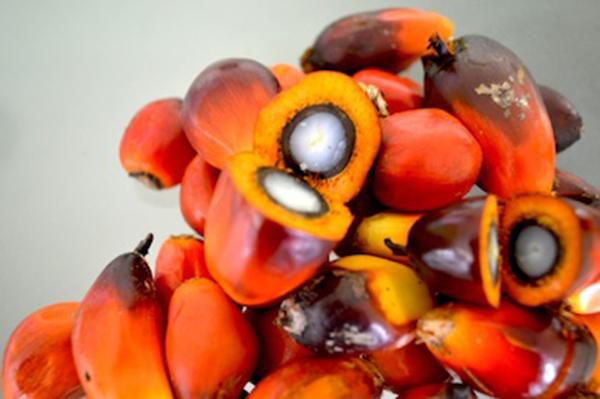 Пальмовое масло свойства