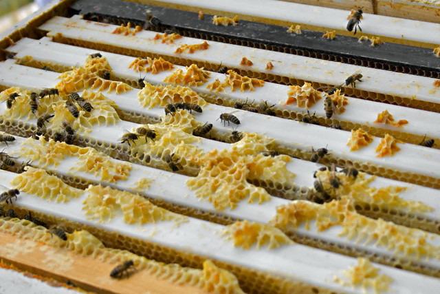 Пчелиный воск для отбеливания зубов